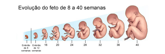 fetos